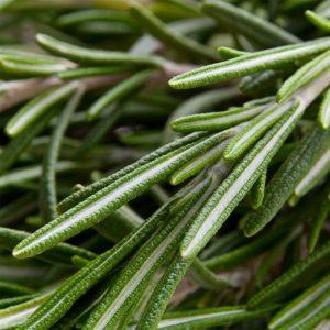 Hạt giống hương thảo (Rosemary)